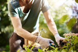 Using tools like shears for extended periods can give rise to elbow problems and the need to use an elbow brace for gardening.