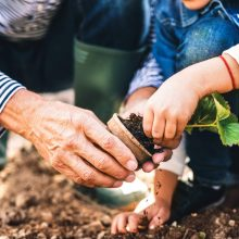 Two people gardening. The need to crouch for prolonged periods can lead to repetitive stress injuries of the back and then to the need to wear kinesiology tape for gardening activities.