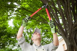 Gardener reaching overhead to trim a tree. Prolonged periods doing this type of task can lead to injuries treatable by wearing a shoulder support for gardening.
